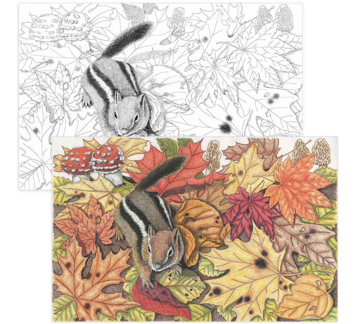 color escapes adult coloring kit garden